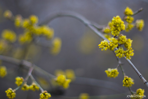 jovan photography: spring in Kiev 2008
